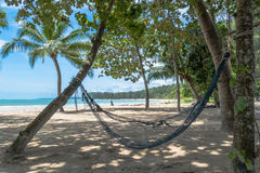 Cradle on coconut trees Stock Image
