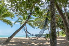 Cradle on Coconut trees Stock Photos