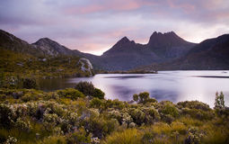 Cradle Mountain Australia. The iconic image of Tasmania, Cradle Mountain sits majestic atop the the jewel that is Dove Lake bathed in glowing sunset light Royalty Free Stock Photo