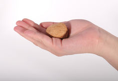 cradled грецкий орех руки Стоковые Фотографии RF