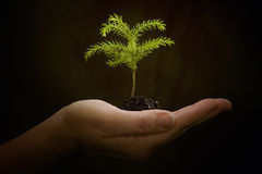 Cradling New Life – Hand Holding Baby Plant Stock Photography