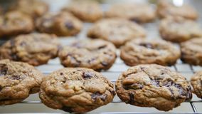 Fresh Cookies Hot out of the Oven stock photo