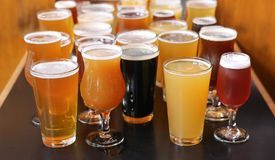 Assorted Craft Beer Tasting Flight. A Craft Beer Tasting Flight Sample of Many Beers Are On Display on a Bar Counter royalty free stock image