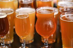 Craft Beer Tasting Flight royalty free stock photography