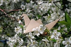 Craft origami paper crane on cherry blossom. Craft origami paper crane on the branch of cherry blossom royalty free stock image