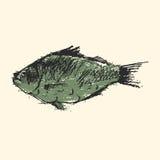 Craft sketch fish vector illustration. Royalty Free Stock Image