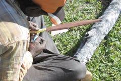 Craftman indigène d'Australiens indigènes faisant une lance indigène australienne en bois photos stock