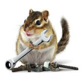Craftsman chipmunk with wrench stock photo