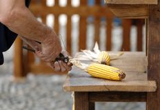 Craftsman who intersects the leaves of a corn cob Royalty Free Stock Images
