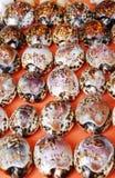 Craftwork: tartaruga Imagens de Stock Royalty Free