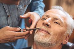 Crafty barber styling beard of the aged client in barbershop Stock Image