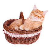 Crafty cat is in the basket Royalty Free Stock Photos
