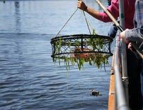Crag fishing Royalty Free Stock Photos