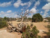 Craggy Desert Tree Stock Photography