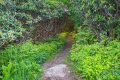 Craggy Gardens NC Hiking Trail Stock Photos