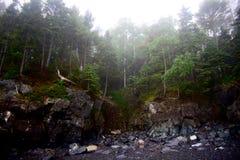 Craggy Rocky Shoreline in Maine mit Nebel und Bäumen Lizenzfreies Stockfoto