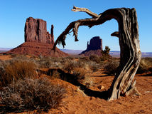 Craggy Tree Stock Photography