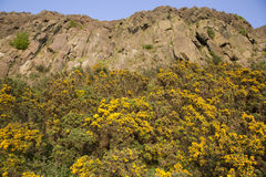 Crags de Salisbúria, parque de Holyrood, Edimburgo imagens de stock