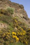 Crags di Salisbury, sosta di Holyrood, Edinburgh immagine stock libera da diritti