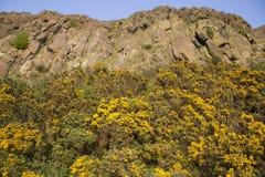 Crags di Salisbury, sosta di Holyrood, Edinburgh immagini stock