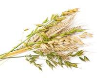 Céréales Photos libres de droits
