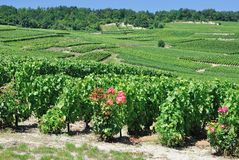 Cramant,Champagne region,France Stock Image