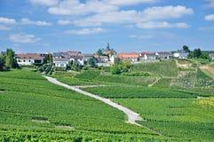 Cramant champagneregion, Frankrike Arkivbilder