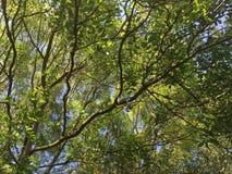 Cramlington en bois du Nelson Photographie stock