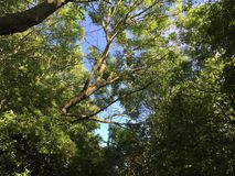 Cramlington en bois du Nelson Photos stock