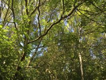 Cramlington en bois du Nelson Image libre de droits