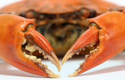 Cramp. Of a cooked crab stock photography