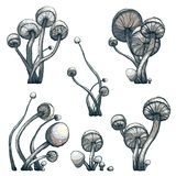 Cramped Toadstool Mushrooms Composition Collection Stock Image