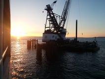 Cran mit einem Sonnenuntergang Stockbild
