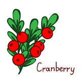 Cranbberies branch illustration Stock Image