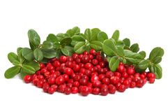 Cranberries Royalty Free Stock Photography