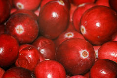 Cranberries. Close up shot of large red cranberries Stock Photos
