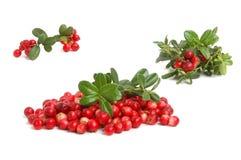 Cranberries Royalty Free Stock Photos