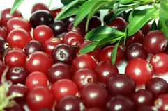 Cranberries royalty free stock images