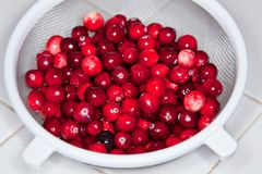 Cranberries. Are a group of evergreen dwarf shrubs or trailing vines in the genus Vaccinium subgenus Oxycoccos, or in some treatments, in the distinct genus Royalty Free Stock Photos