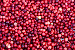 cranberries Royaltyfri Bild