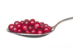 Cranberries. Royalty Free Stock Images