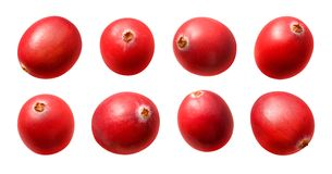 Cranberries. Isolated on a white background. Isolation is on a transparent layer in the PNG format royalty free stock images