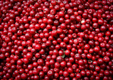 Free Cranberries Royalty Free Stock Photography - 20852777