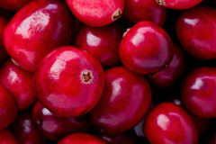 Cranberries. Background texture of a pile of whole cranberries stock photo