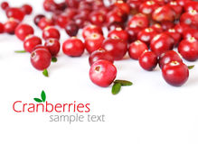 cranberries obrazy stock