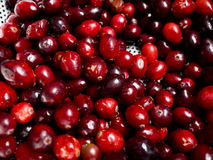 cranberries fotografia stock