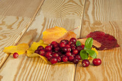 Cranberries Royaltyfri Foto