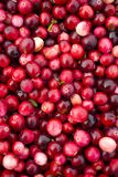 Cranberries Close up Headed for Market Royalty Free Stock Images
