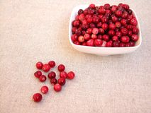 Cranberries Stock Image