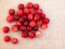 cranberries arkivbild